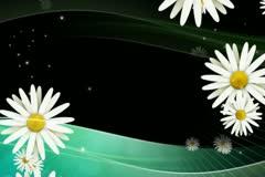 Daisies on Green Overlay Stock Footage