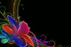 Vibrant Flourish Overlay Stock Footage