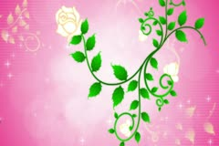 Roses Devine Flourish Background 01 Widescreen Stock Footage