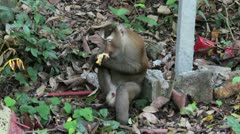 Monkey 1 Stock Footage