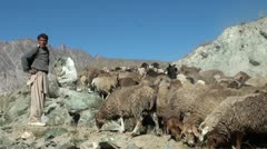 Herding sheep in the mountains of the Hunza Valley, Pakistan Stock Footage