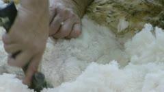 shearing a sheep - stock footage