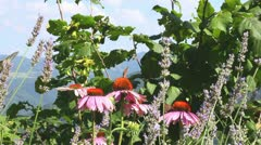 Insects on flowers Stock Footage