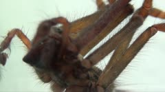 SPIDER MACRO Stock Footage