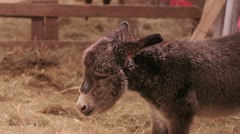 Young donkey Stock Footage