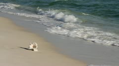 Shell Collector Running Stock Footage
