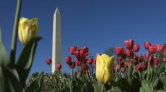 National Mall Stock Footage