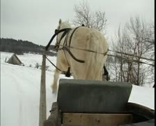 Horse in harness, winter in Russia Stock Footage