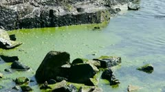 Ocean water surface and rock reef coastal,algae,seaweed,ebb,gravel,pollution. - stock footage