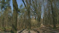 Veluwe forest wood lane early spring 01i Stock Footage