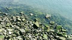 Ocean water surface and rock reef coastal,algae,seaweed,ebb,gravel,pollution. Stock Footage
