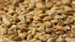 Grain Stock Footage