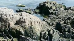 Ocean water surface and rock reef coastal,algae,seaweed,ebb,gravel,skyline. Stock Footage