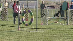 Editorial: Border Collie Jumping Through Hoop in Agility Trials Stock Footage