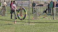 Stock Video Footage of Editorial: Border Collie Jumping Through Hoop in Agility Trials