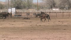 A Foal and Horse Mother Walk Together Stock Footage