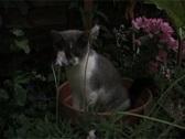 Cute kitten in pot plant pot Stock Footage