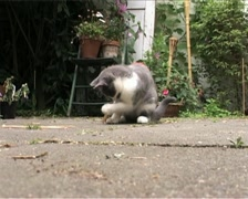 Cute kitten playing with peg Stock Footage