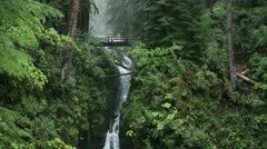 Hoh Rain Forest Olympic NP 1  JPEG 100 NTSC Stock Footage