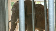 Elephant cage Stock Footage