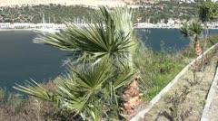 Palm-puita marina taustalla Arkistovideo