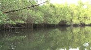 Stock Video Footage of mangrove