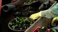 Plantation Close-Up Stock Footage