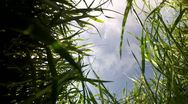 Stock Video Footage of Field of grass in the wind
