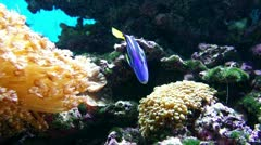 Stock Video Footage of Colourful Coral Reef and Fish.