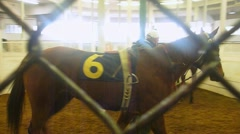 Racing Horses and Trainers 2 Stock Footage