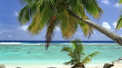 Waves on a tropical beach with palm tree - stock footage