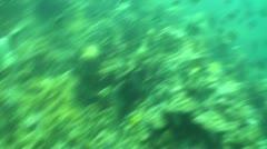 Pond5 106 Stock Footage