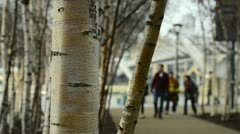 Silver Birch trees & people Stock Footage