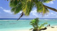 Waves on a tropical beach with palm tree Stock Footage
