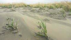 Heavy Winds on Sand Dunes Stock Footage
