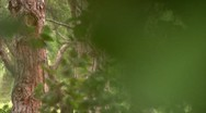 Forest 02 Dolly L Stock Footage