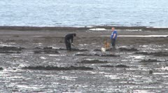 Digging for Mussels Stock Footage