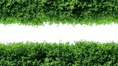 Nature - stock footage