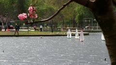 Mini Sailboat with Cherry Blossoms Stock Footage
