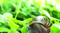 Snail Stock Footage