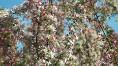 Closeup of japanese anemone flowers Stock Footage