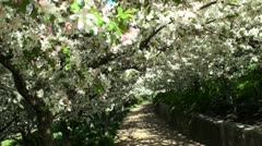 Trail in the spring Stock Footage