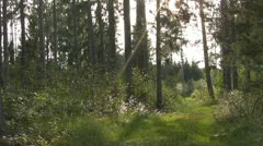 Forest - stock footage