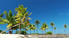 palm trees - stock footage