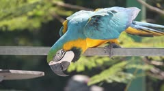 Parrot - stock footage