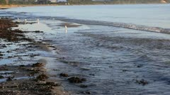 In the morning, shortly after sunrise on the German Baltic coast Stock Footage
