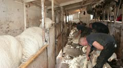Sheep shearing electric cutters for wool P HD 9693 Stock Footage