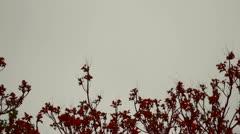 arbol copa rojo efecto - stock footage