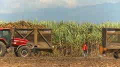 Agriculture, sugar cane harvest tractor and load Stock Footage