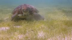 Loggerhead turtle underwater mexicoturtle22 Stock Footage